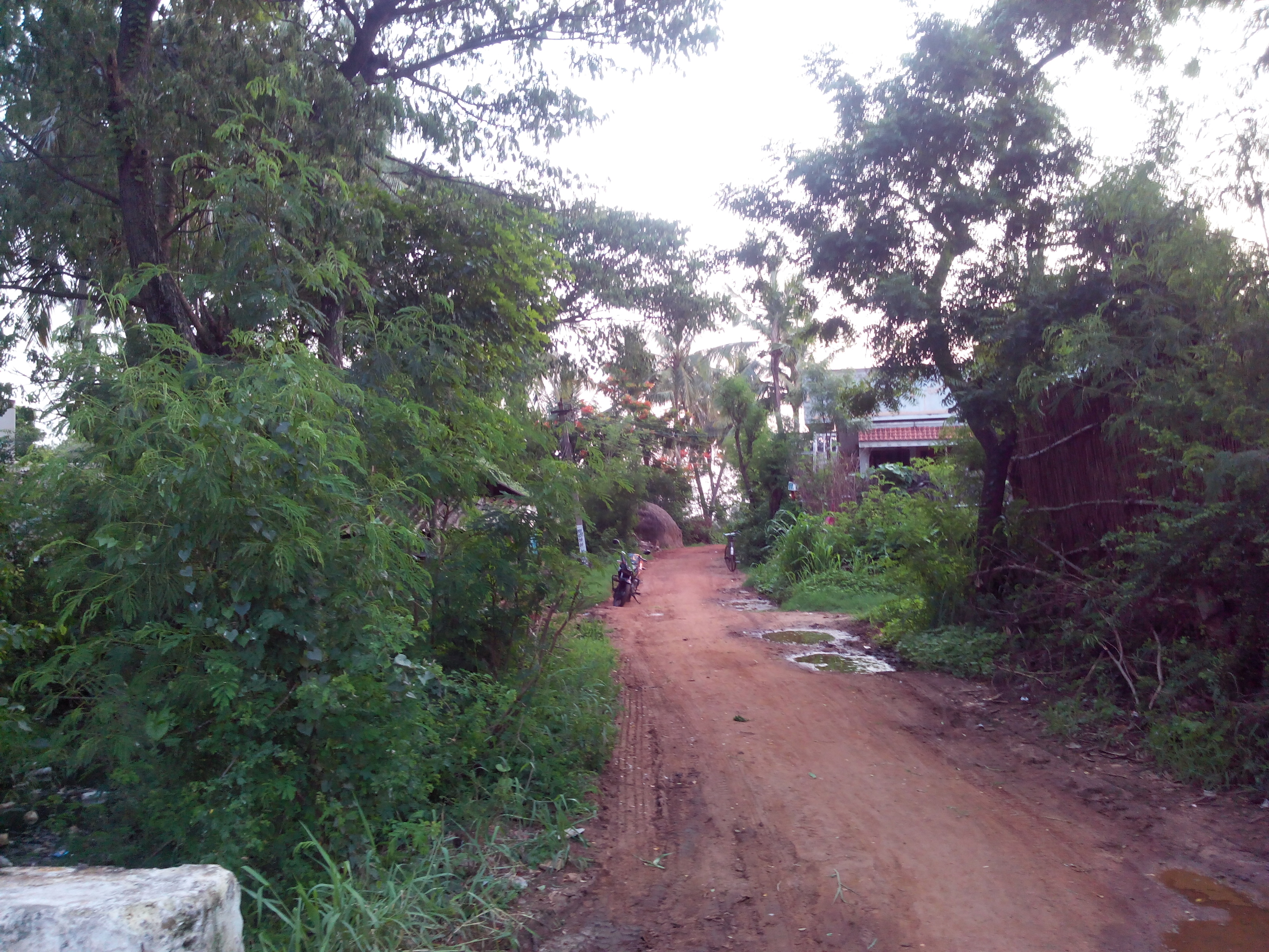 Putlacheruvu Main Road Near Raagi Chettu Center towards Pasalapudi Road